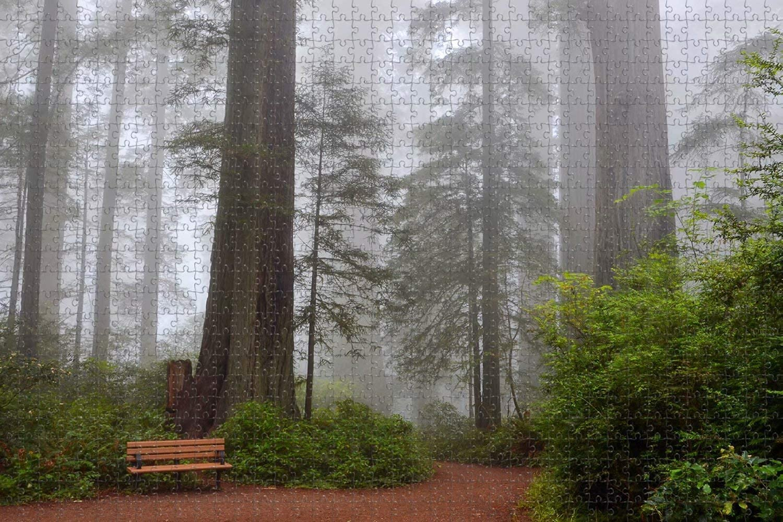Seattle Mall USA America Visalia Sequoia National Park Puzz Jigsaw Cheap super special price Piece 1000