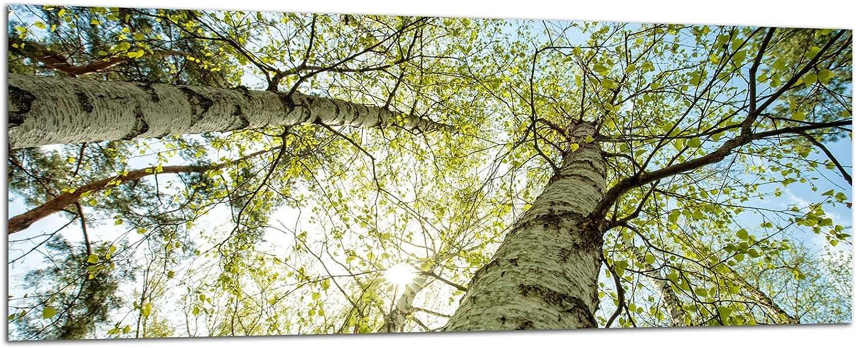 Glasbilder Wandbilder 125x50cm 125x50cm 125x50cm Birken Bäume AG312502491   Deco Glass, Design & Handmade Eyecatcher, Kunstdruck  B074LYQ39B 9c2d5a