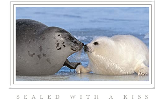 respuestas rápidas Holiday Seals foca Tarjetas de de de Navidad  colores increíbles