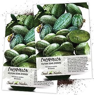 mexican sour gherkin cucumber melothria scabra