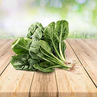 Spinat 100 x Samen - Aus Portugal 100% Natürlich Ohne Chemische Anzuchthilfe Oder Gentechnik, Einfach Nur Natur Pur