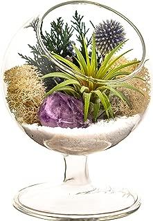 Best amethyst flower plant Reviews