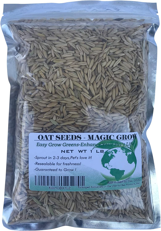 Cat Grass Sweet Oats for Cats 1LB Grow Gre 3000 + Sale Seeds -Easy Award-winning store