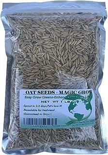 Oat Grass Seeds 1 Lb (3000+ Seeds)- Cat,Dog,Pets- Oat Grass Seeds