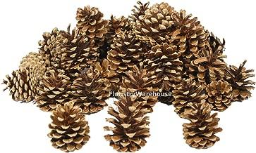 FloristryWarehouse Pine Cones 4-7cm 1Kg (x 45) Dried Natural