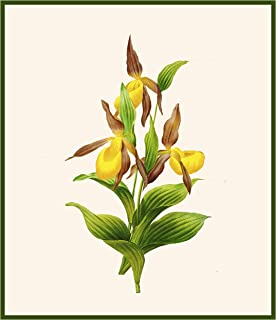 Orenco Originals Redoute's Lady Slipper Orchid Flowers Counted Cross Stitch Pattern
