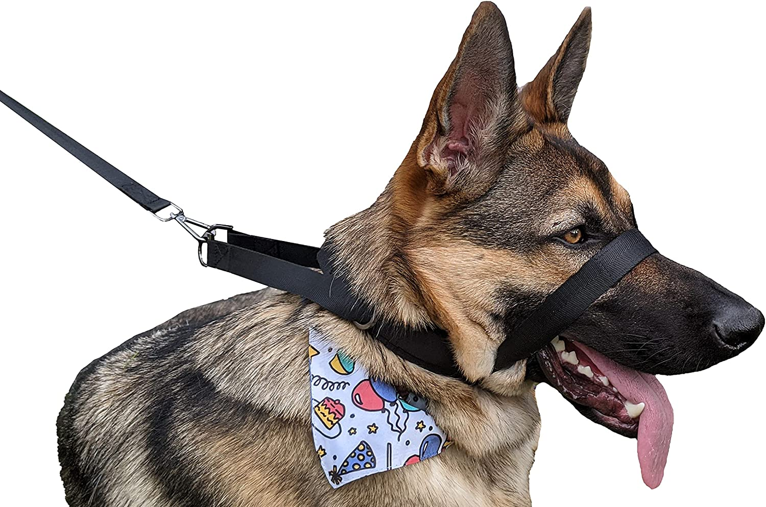 Dog Walking Training Collar Instant Surprise price a Stop for Pulling Ranking TOP17