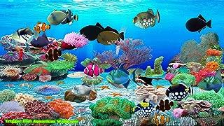 Trigger Fish Aquarium [Download]