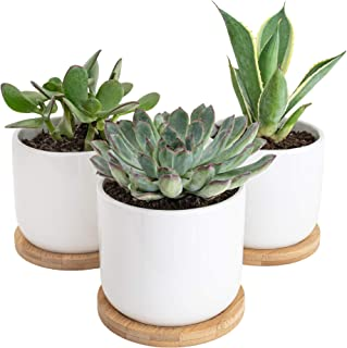 Sona Home 4 Inch Pots for Plants with Drainage Tray - Small Plant Pot, Succulent Pot, Small Flower Pot, Cactus Planter - Set of 3 Ceramic White Pots for Plants
