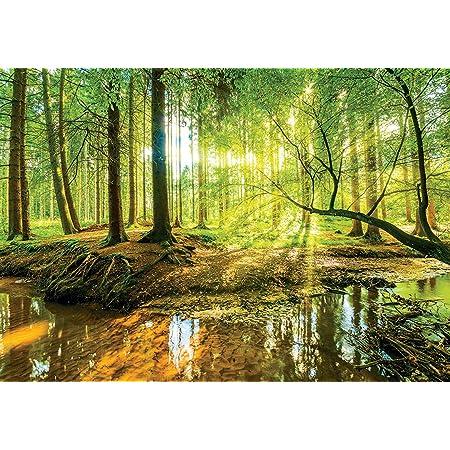 Vlies Fototapete Tapete Poster   F13320 Sonniger Wald  Natur Landschaft Wald Bäu