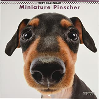 The Dog Wall Calendar 2019 Miniature Pinscher