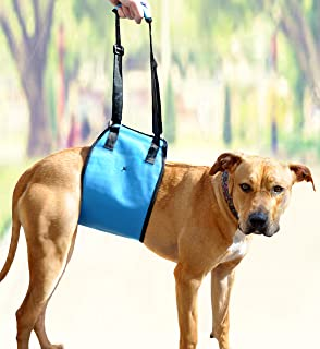 AMZpets Dog Lift Harness Support Sling Helps Dogs with Weak Front or Rear Legs Stand Up, Walk, Get Into Cars, Climb Stairs. Best Alternative to Dog Wheelchair