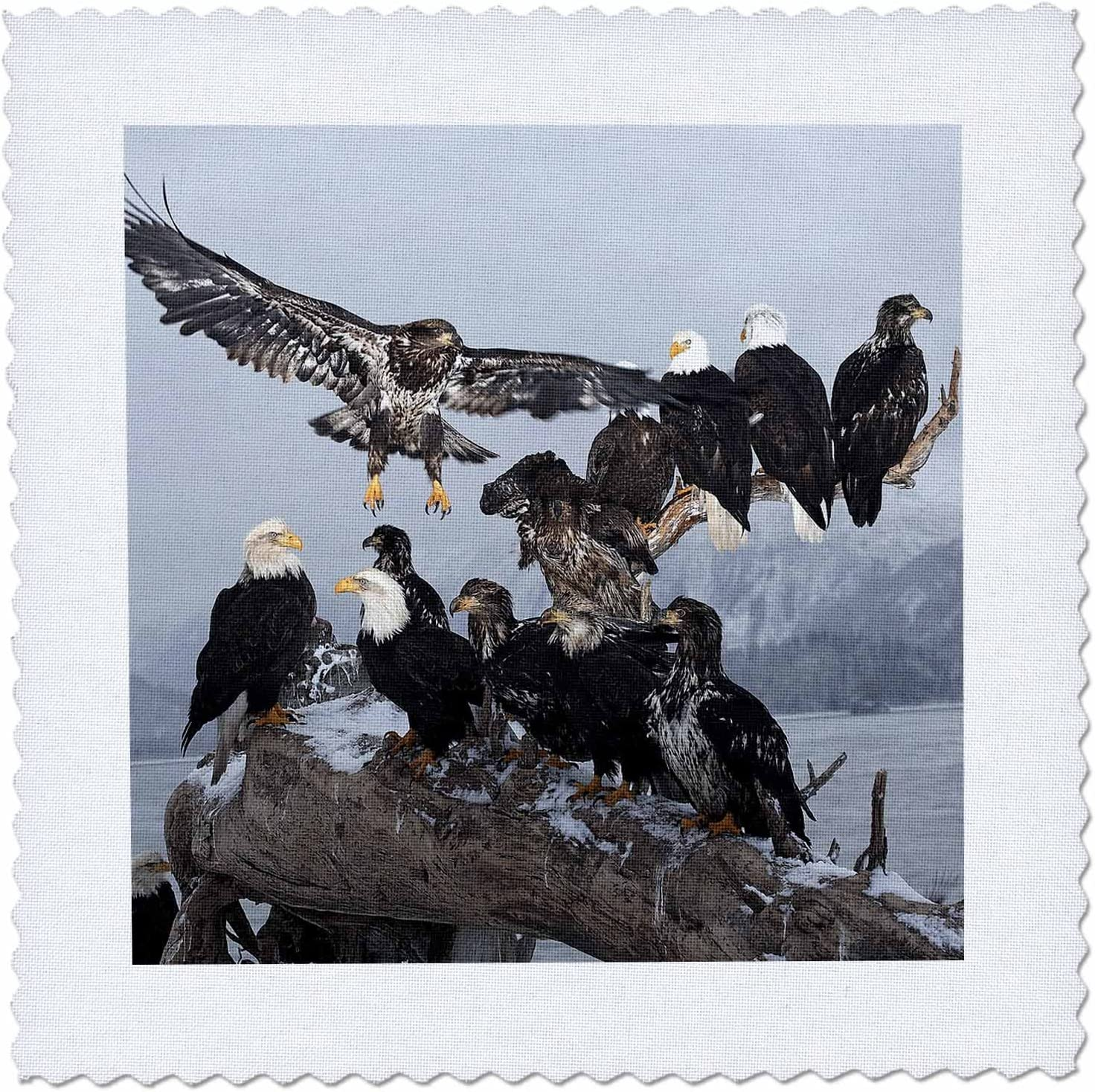 Max 82% OFF 3dRose Sea Otter Wildlife Shells Seward Na02 Alaska - Fixed price for sale Rnu0780