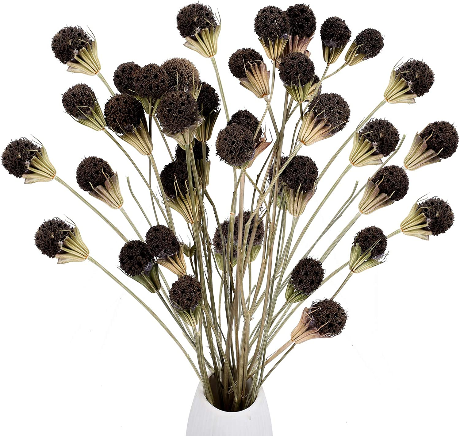 XHXSTORE 2Pcs Dried Flowers Natural Special price for a limited depot time Cones Flo Bouquet Pine