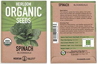 Organic Bloomsdale Spinach Seeds - Long Standing - 4 g Seed Packet - Heirloom, Non-GMO Gardening Seeds - Microgreens and Salad Garden