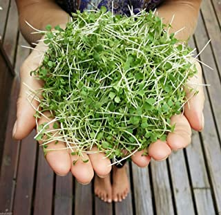 Mustard Microgreen 200 Seeds - Wasabi (Brassica Juncea) Grow Year Round, 5 Days Microgreens