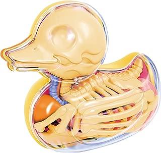 Bathing Ducky Funny Anatomy by Jason Freeny