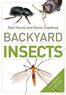 Backyard Insects