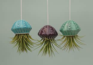 Small Jellyfish, Hanging Air Plant Holders