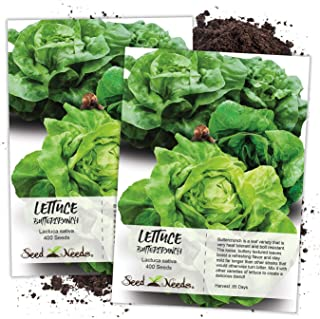 Seed Needs, Buttercrunch Lettuce Seeds for Planting (Lactuca Sativa) Twin Pack of 400 Seeds Each Non-GMO