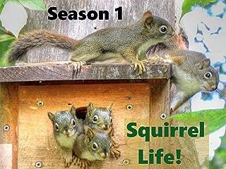 Squirrel Life!