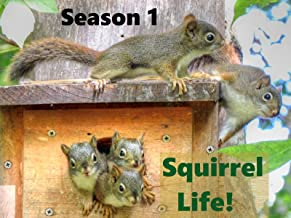 Squirrel Life!