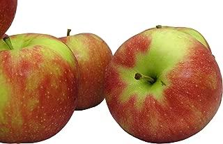 Best jonagold apple tree size Reviews