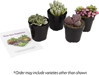 Best stone mimicry plant Reviews