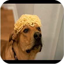 Dog Funny n Crazy Videos