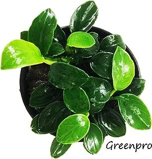 Best anubias nana plant care Reviews