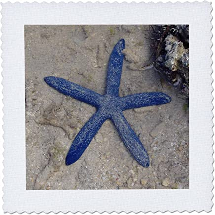 3dRose qs_22794_3 Rare Blue Sea Star starfish Waters of Malolo Island Fiji Quilt Square, 8 by 8-Inch