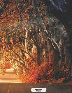 Photo-Stock Notizbuch: Mystische Wald Atmosphaere im Herbst  Tagebuch Journal 150 Seiten liniert | Notizbuch im A4 Format | mattes Softcover