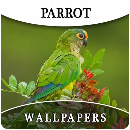 Parrot HD Wallpapers And Background