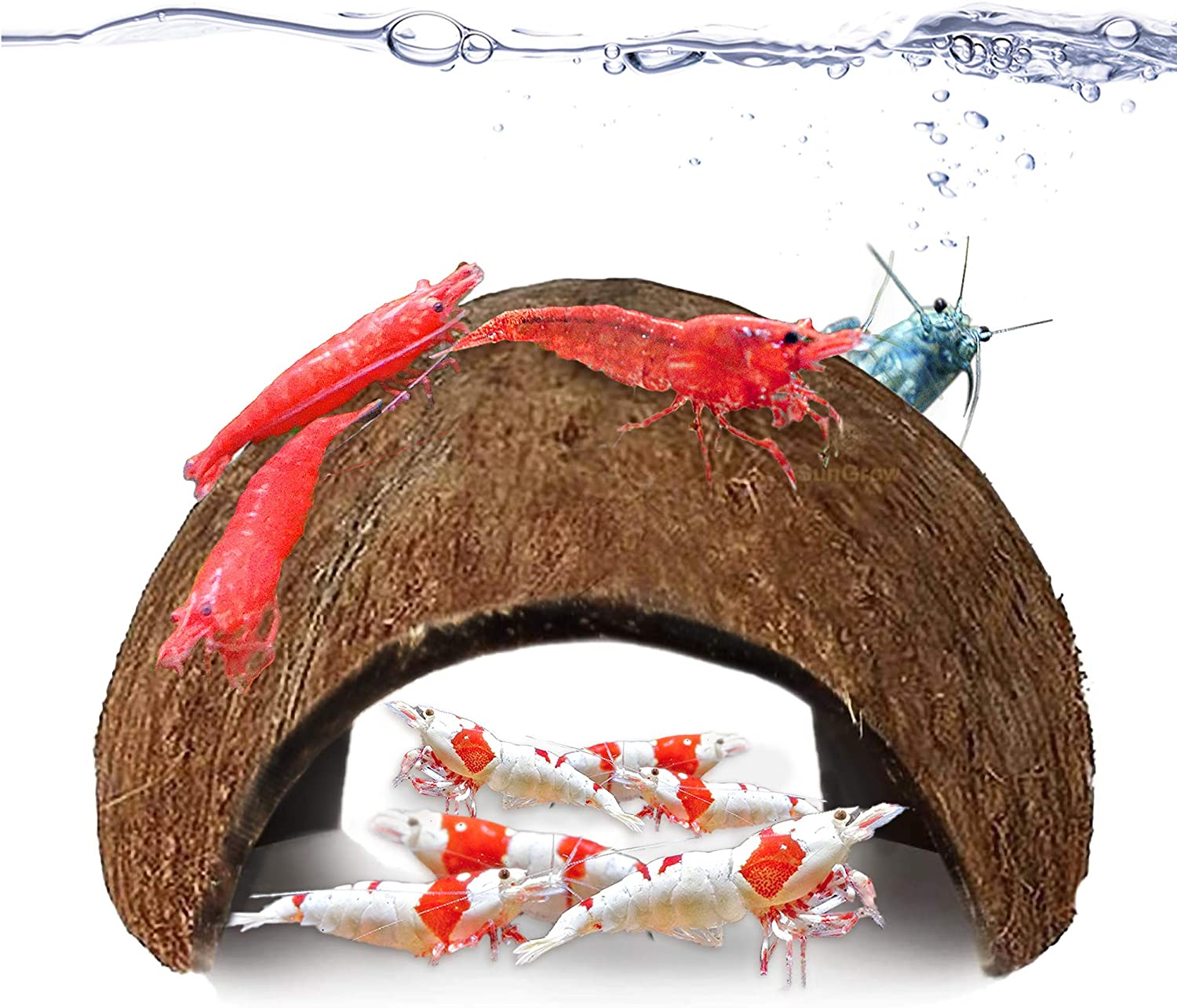 JOR Coco Shrimp Cave, Aquarium Decor, Ideal for Swimming in & Out, Encourages Shedding, Comfortable Shelter and Breeding Area for Crustaceans, 2 Pcs per Pack