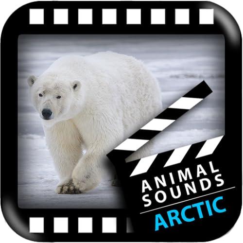 Beste Arktis Tiere Sounds
