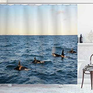 Ambesonne Whale Shower Curtain, Real Photo Image of 4 Killer Whales Coming Out of The Seartwork Print, Cloth Fabric Bathro...