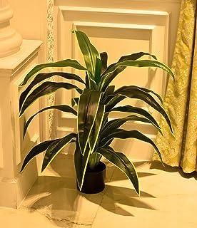 نباتات عطور دراكاينا الصناعية من ياتي مع وعاء بلاستيكي لتزيين المنزل - شجرة وهمية - نباتات وهمية - نباتات داخلية وخارجية -...