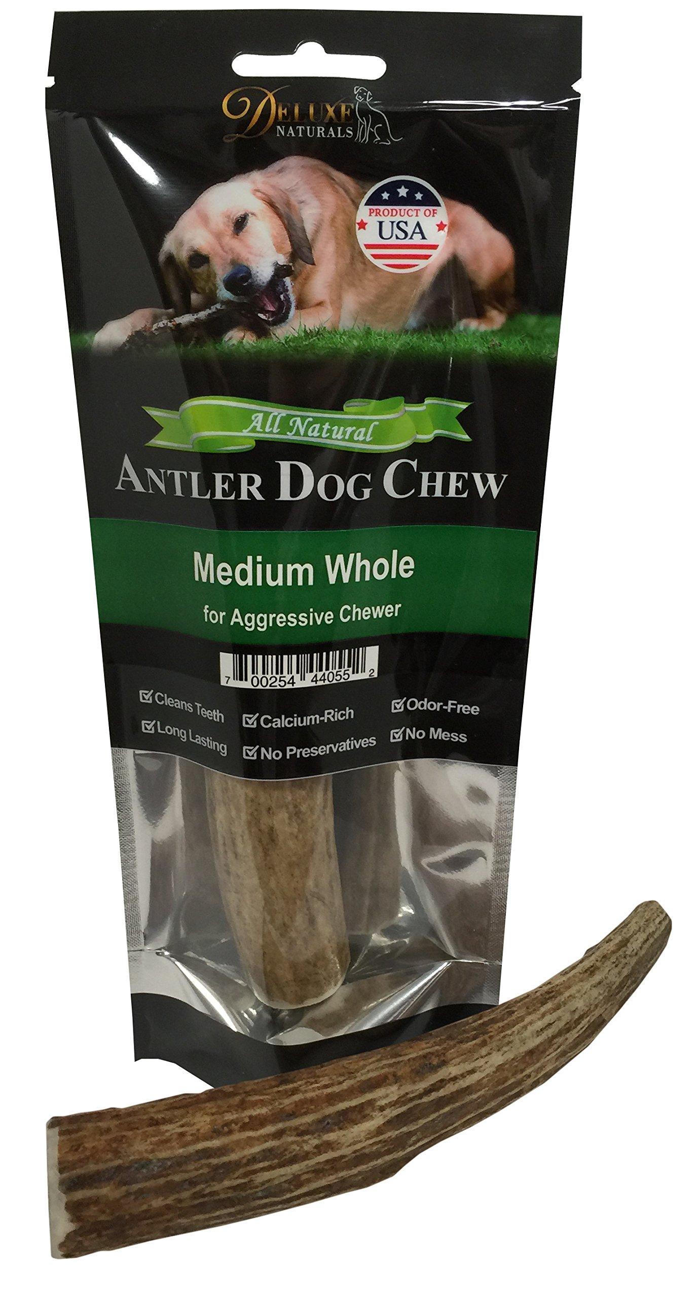 Deluxe Naturals Whole Antler Medium