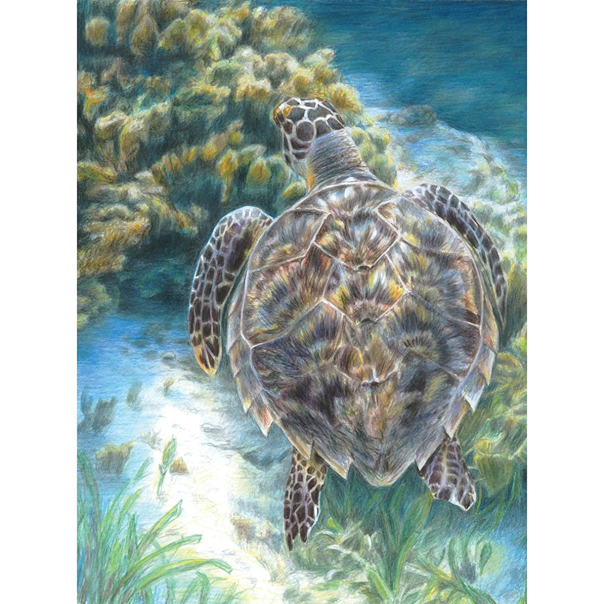 Royal Brush Color Pencil by Number Kit, 8.75 by 11.75-Inch, Sea Turtle