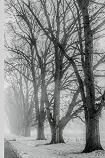 Winter Wonderland - Bare Trees Lining a Road: Wide Ruled Notebook