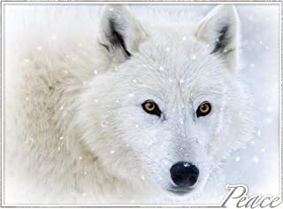 Arctic Winter