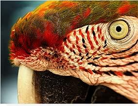 Trademark Fine Art Polly Red and Green by Dana Brett Munich, 35x47