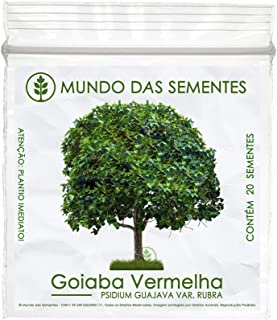 20 Sementes De Goiaba Vermelha Árvore Psidium Guajava Rubra