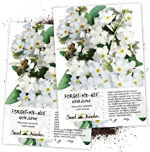 Seed Needs, White Forget-Me-Not (Myosotis alpestris) Twin Pack of 1,000 Seeds Each