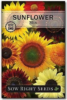 بذرهای مناسب بکارید - یک بسته بزرگ و کامل رنگی از بذر آفتابگردان مخلوط برای کاشت - موروثی غیر GMO - دستورالعمل کاشت - هدیه باغبانی شگفت انگیز (1)