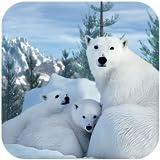 Polar Bear Family Survival