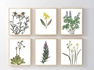 Montana Wildflowers Botanical Print Set - Set of 6 Prints - Unframed - 5X7, 8X10, 11X14 or 16X20 - Pressed Flowers Wall Art - Indian Paintbrush, Lily, Lupine, Fireweed, Prairie Smoke, Glacier Lily
