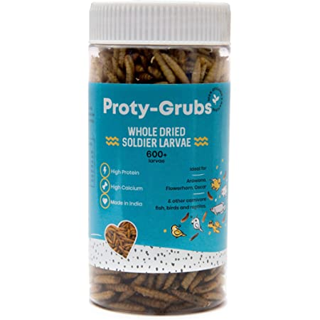PROTYGRUBS Black Soldier Fly Larvae - 100% Natural, High Protein Fish Food for Arowana, Flowerhorn, Oscar, Parrots, and Other Carnivores (50 Gm)