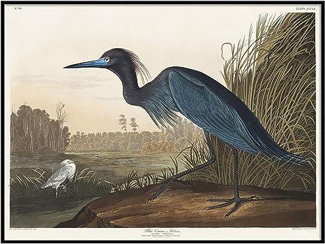 Bird Illustration Bird Print Bird Poster Bluebird 11x14 Art Print