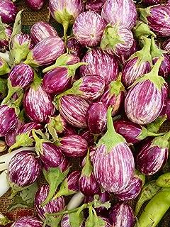Eggplant Rosa Bianica Seeds Rare Heirloom Veggie Bin132 (50 Seeds)